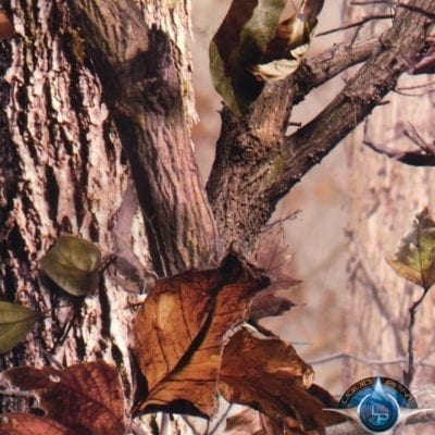 Hidden Forest Film-DD-597