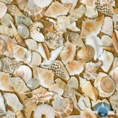 Sea Shells Film-LL-851