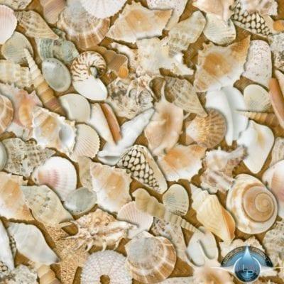 Sea Shells Film-LL-851